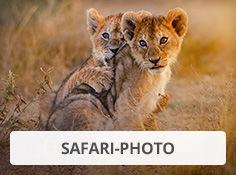 Faites un safari photo avec Leclerc Voyages