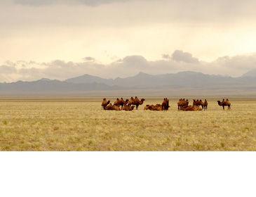 Voyages et vacances en Mongolie